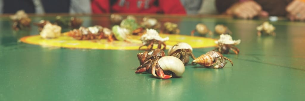 'Tween Waters Inn Crab Races, Photo Courtesy Of 'Tween Waters Inn.