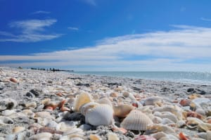 Tons Of Shells On Bowman's Beach By Gregory Moine, Via Creative Commons.