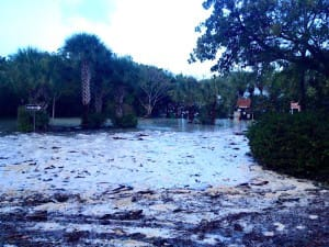 Sanibel Island Flooding, 1-17-16.