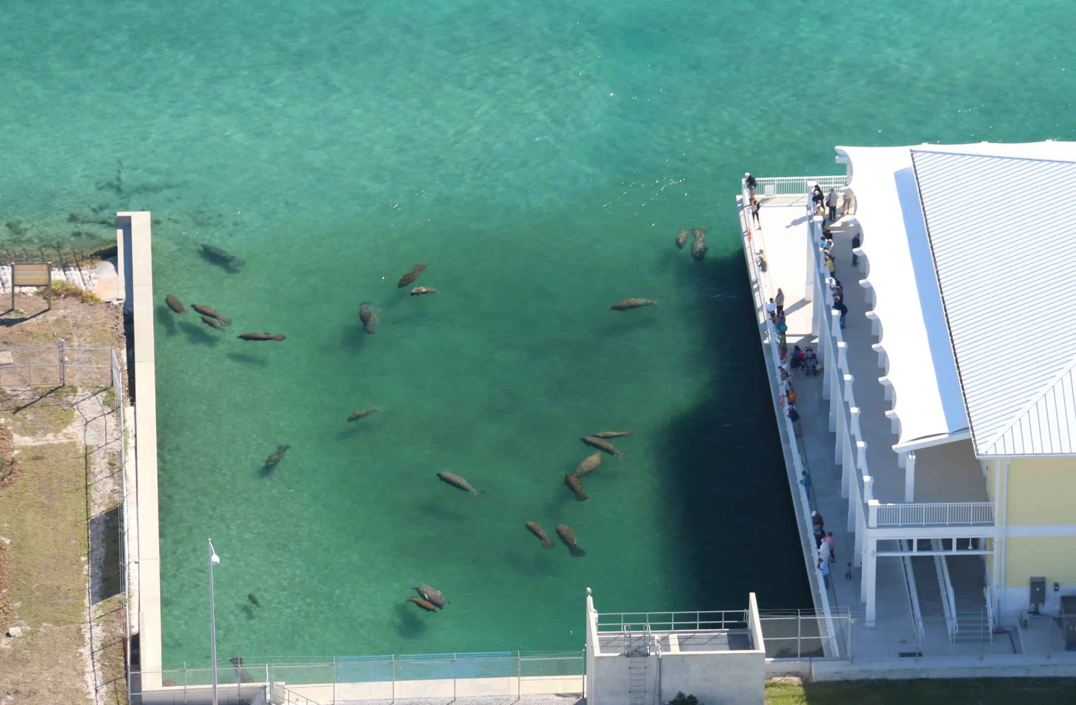FWC 2016 Manatee Aerial Survey. Photo taken by Amber Howell in Palm Beach, FL., Via Creative Commons.