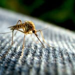 Mosquito Spraying & Abatement Key To Sanibel & Florida
